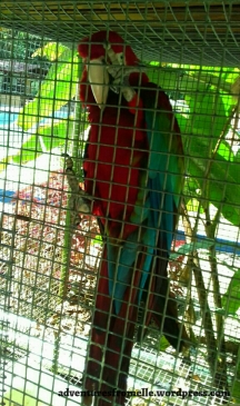 Never found out this parrot's name after all