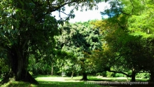 Fifty shades of luscious green in this spot