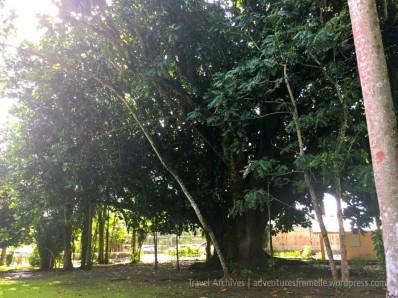 bath botanical garden-baritone tree