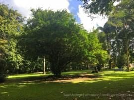 bath botanical garden- trees