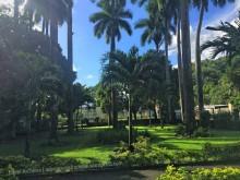 Majestic palm trees at Bath Botanical Garden