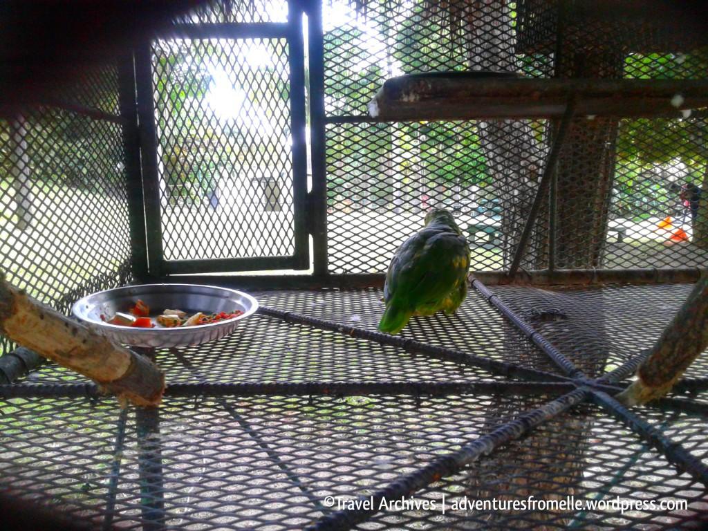 bird-hope zoo kingston