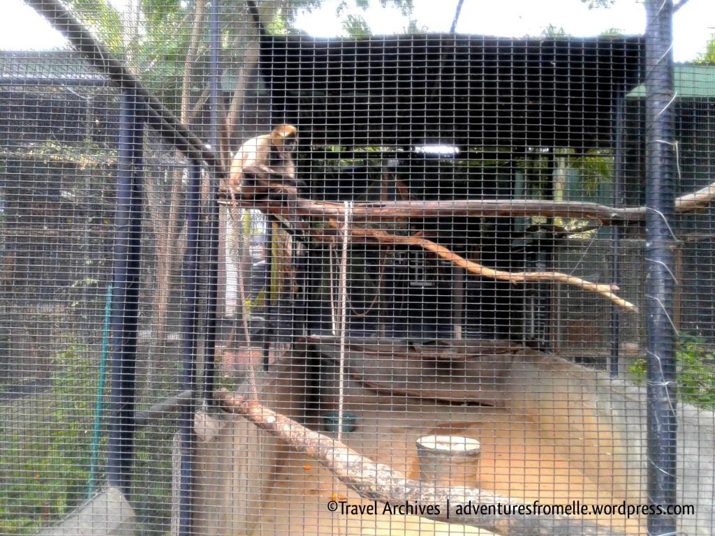capuchin-hope zoo kingston