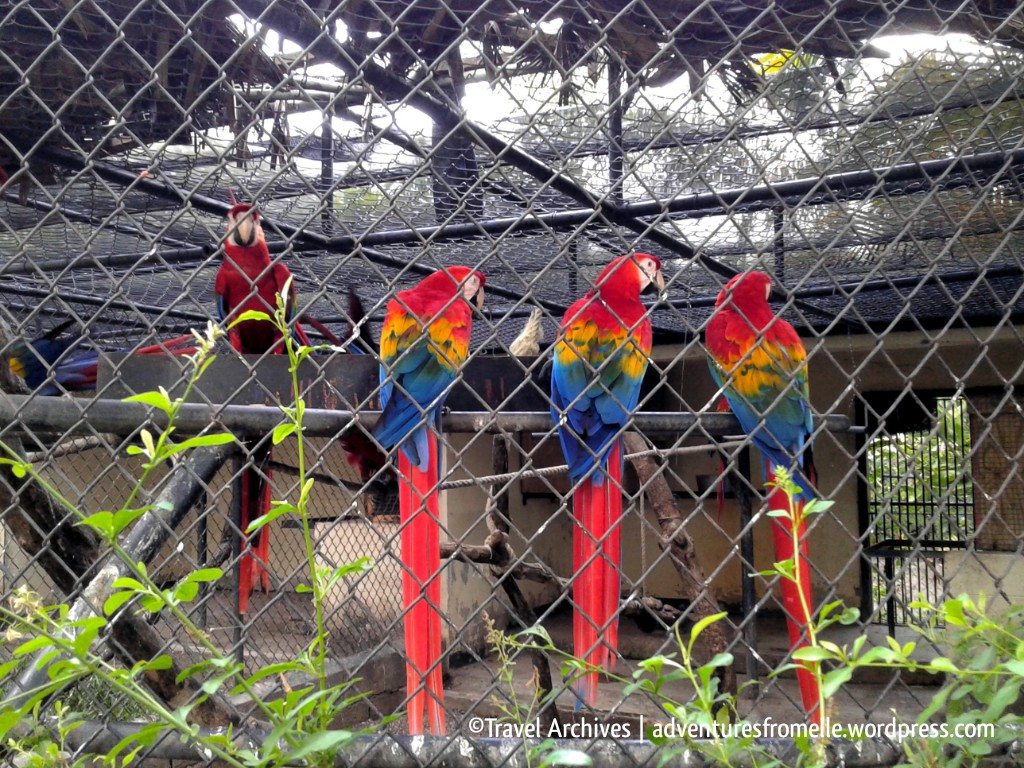 colourful macaws-hope zoo kingston