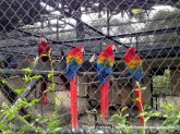 colourful macaws-hope zoo kingston