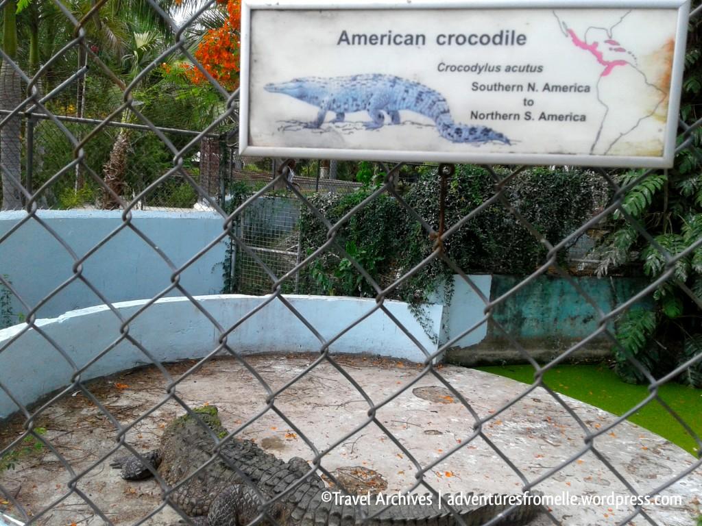croc-hope zoo kingston