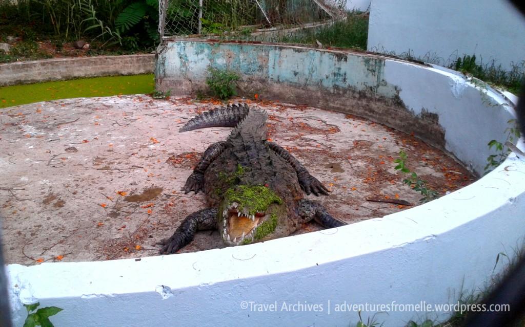 crocodile-hope zoo kingston