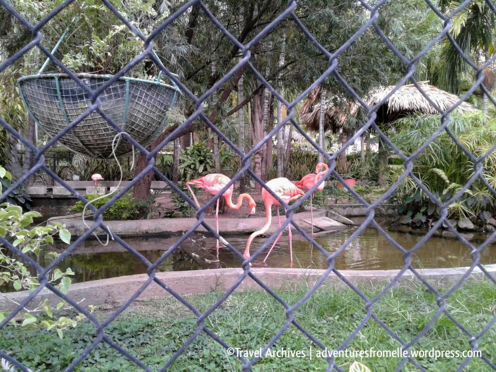 flamingos-hope zoo kingston