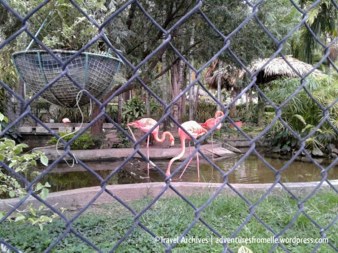 flamingos-hope zoo kingston