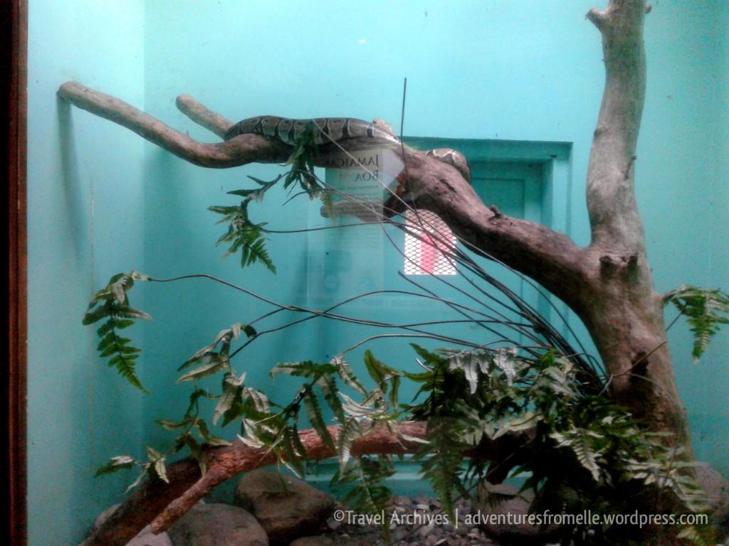 jamaican boa-hope zoo kingston