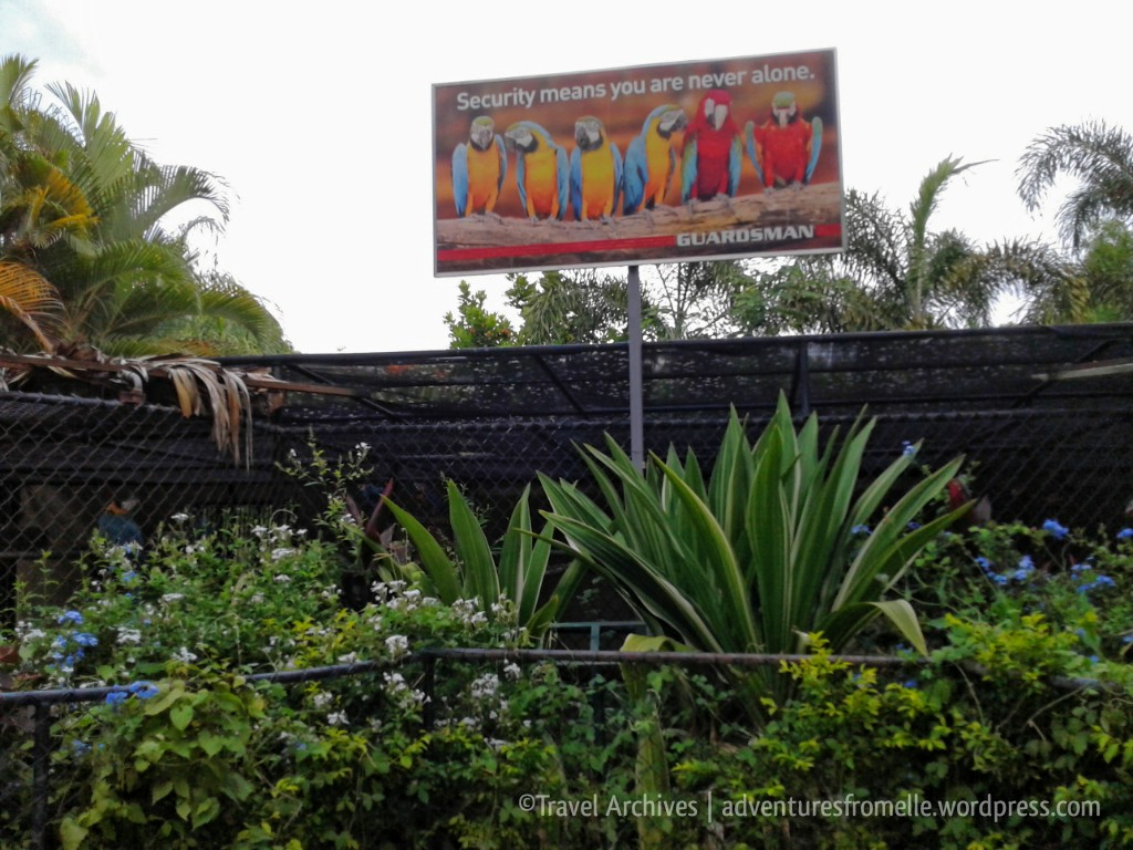macaws-hope zoo kingston