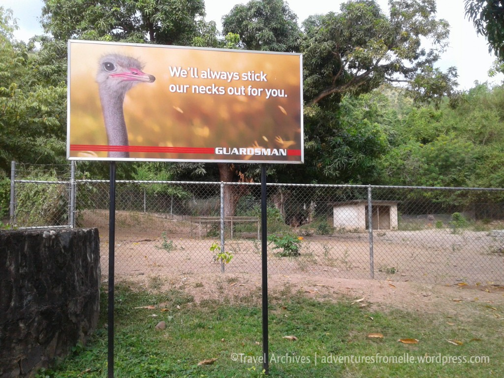 ostriches-hope zoo kingston