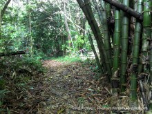 bamboo lined trail