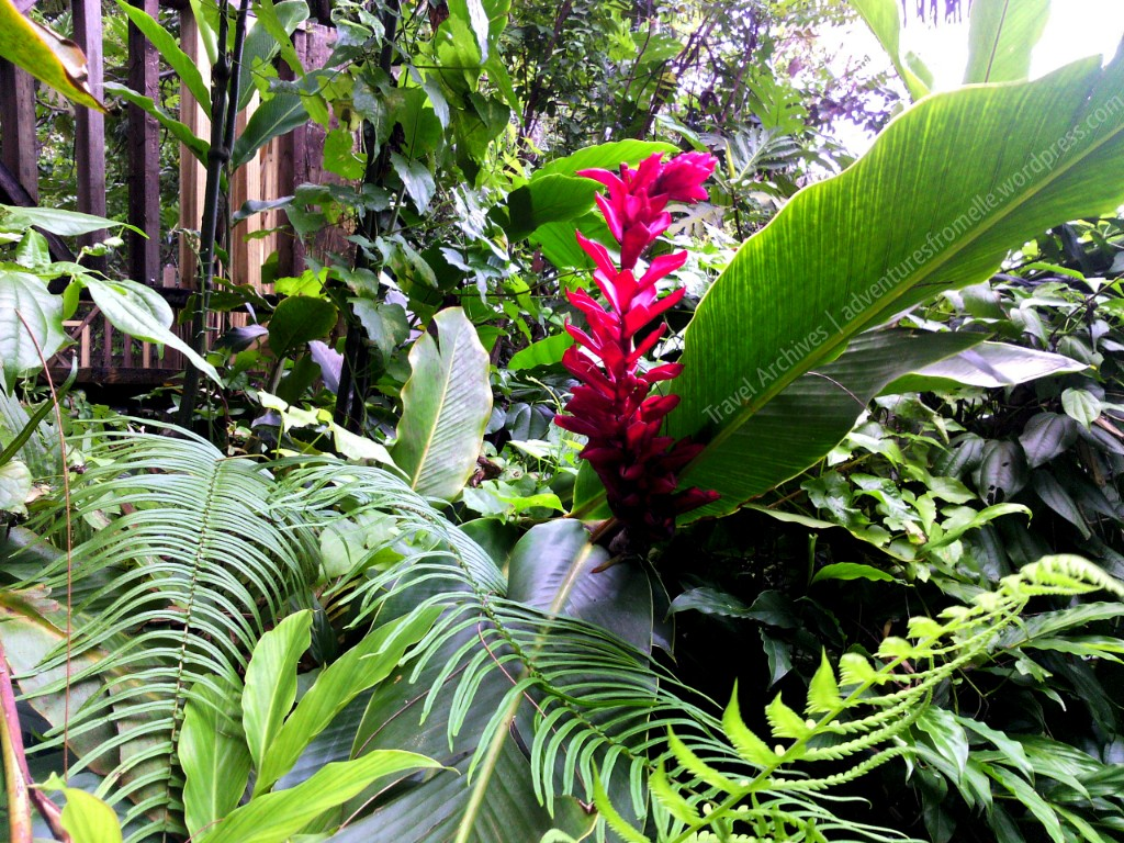 beautiful flowers-dunns river