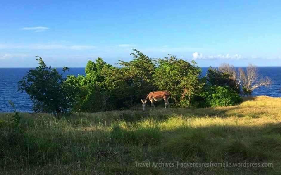 donkey along the trail-kwame falls