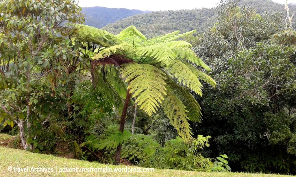 ferns-holywell