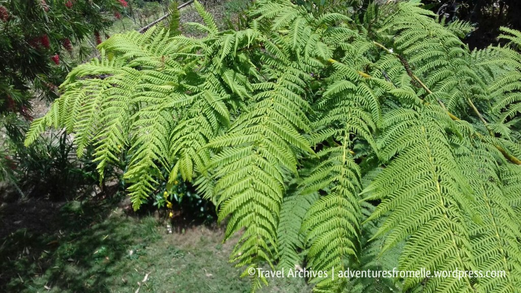 ferns-lime tree farm