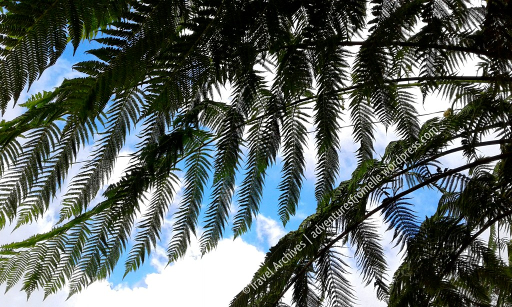 fernss-holywell