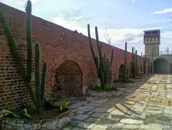 Beautiful cacti complimenting the Fort