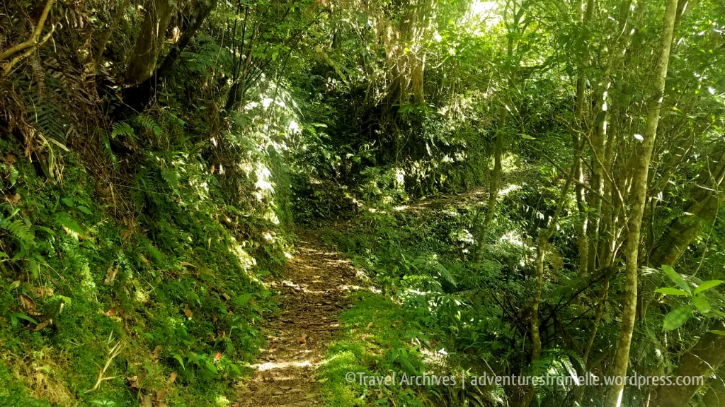greentunnel-holywell