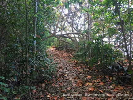 leafy trail to kwame falls
