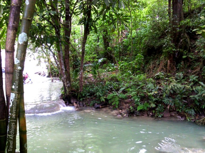 lush greenery-dunns river