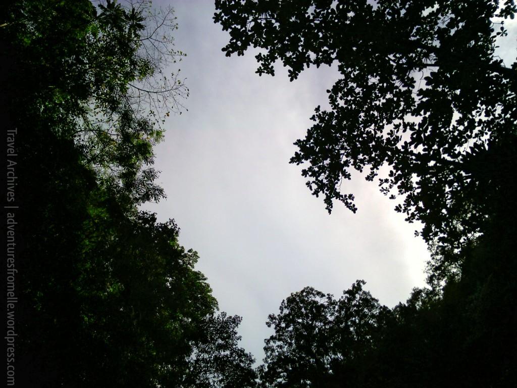 overhead foliage shot kwame falls