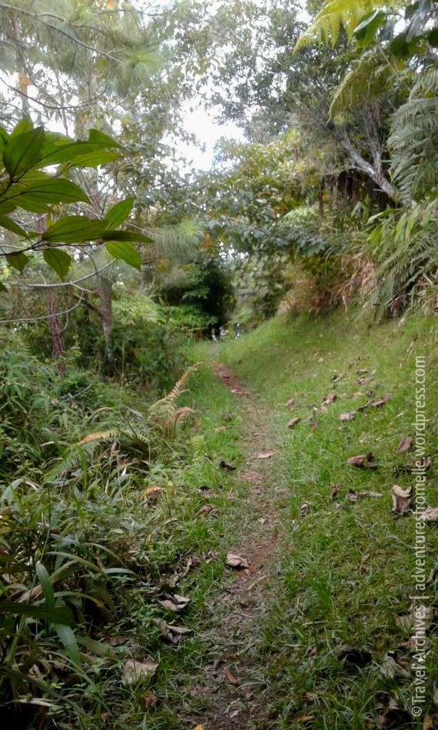 path-holywell.jpg