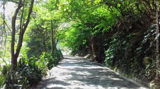 road to lime tree farm