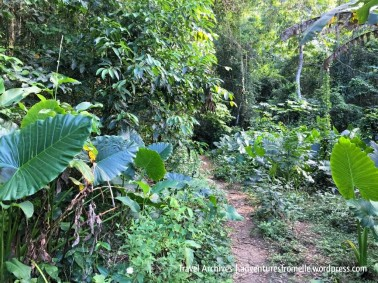 trail to kwame falls-2