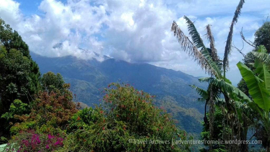 views from lime tree farm 1