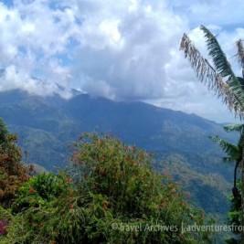 Views at Lime Tree Coffee Farm