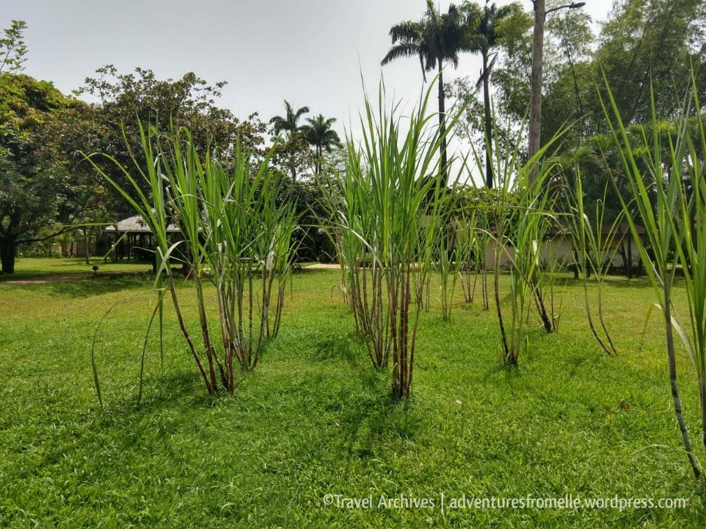 sugarcane-appleton rum experience 2018.jpg
