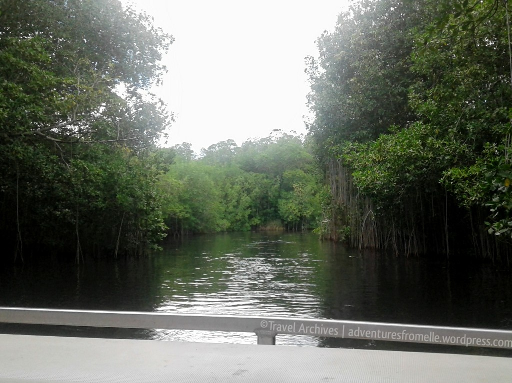 black river safari-admiring the mangroves