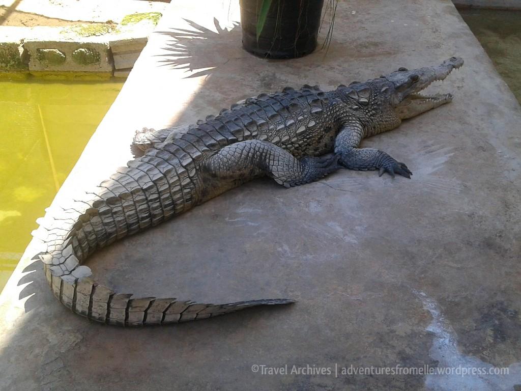 croc-nursery