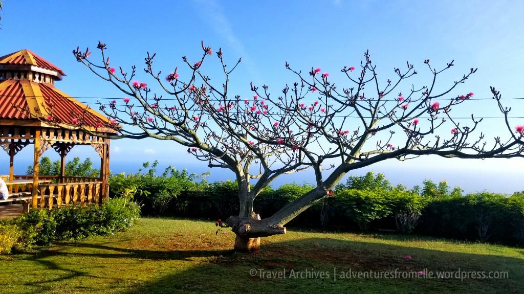 loversleap-tree