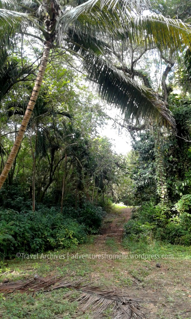 path-breadnut valley