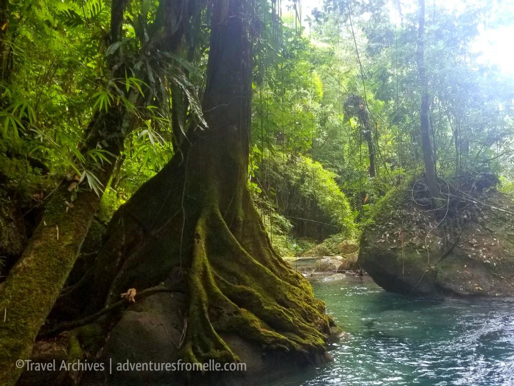 tree roots-reach falls