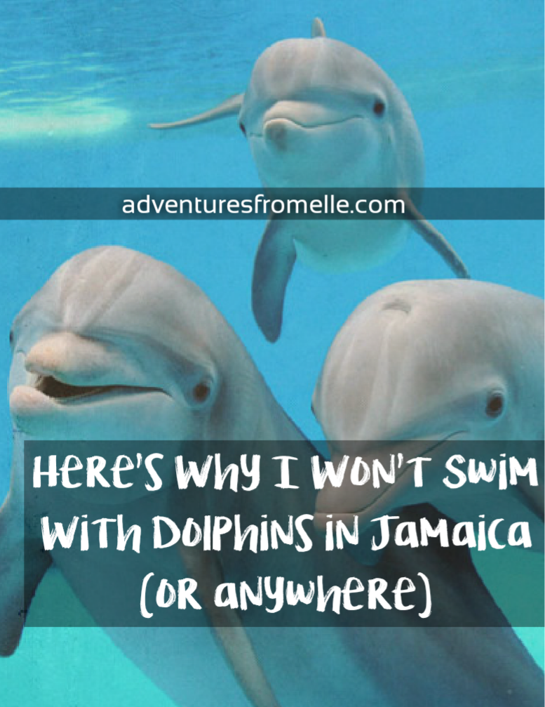 Why i wont swim with dolphins in jamaica