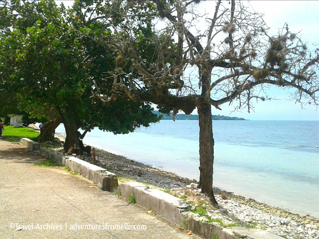 trees at bluefields beach
