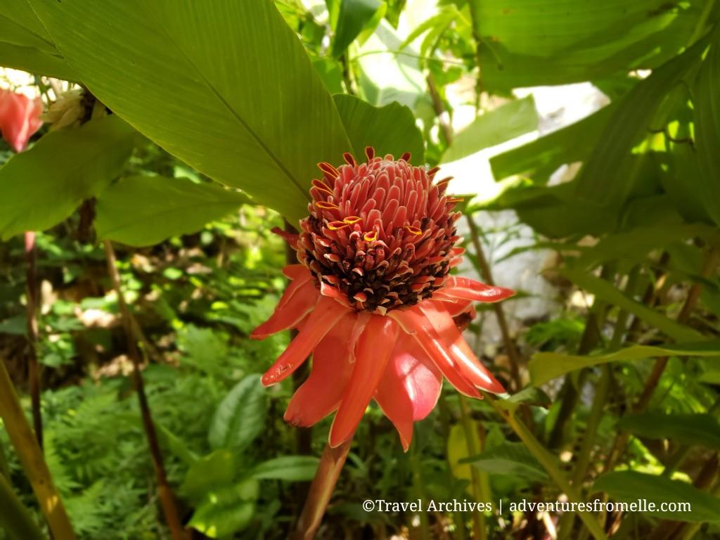 konoko falls-flower3.jpg