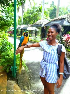 konoko falls-macaw elle.jpg
