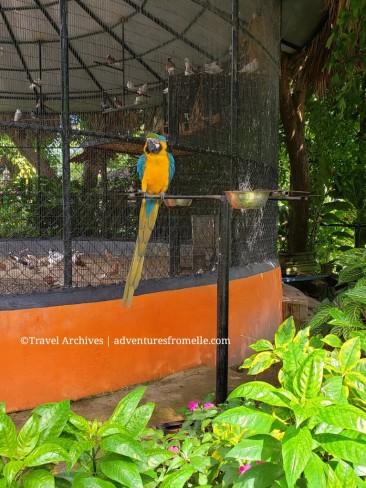 konoko falls-macaw.jpg
