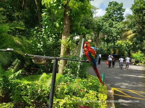 konoko falls-macaws2.jpg