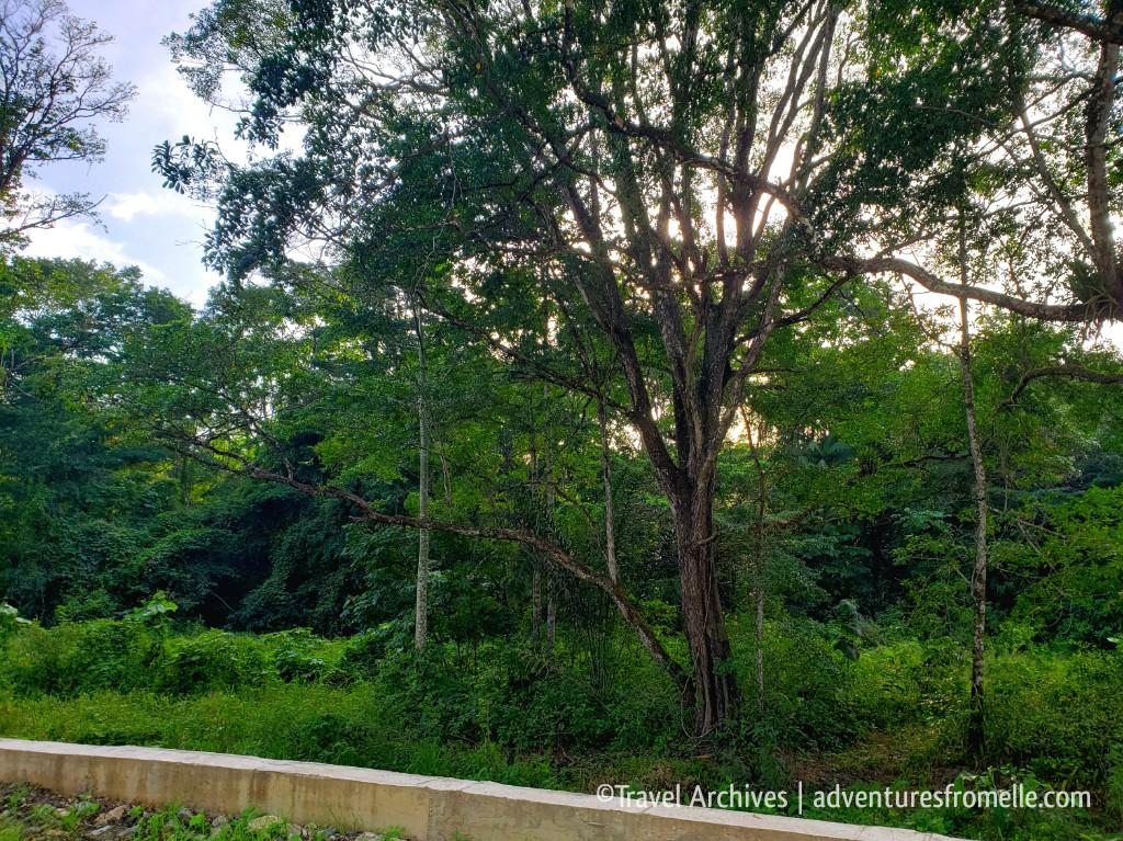trees-las cuevas.jpg